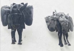 WALL HANGING DONKEYS, a pair, mid 20th century patinated tin plate layered construction,