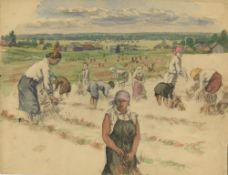 Gathering Buckwheat