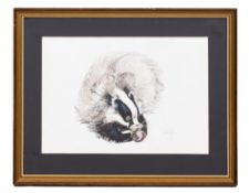 SYLVIA C BALL (20TH CENTURY ENGLISH SCHOOL) A badger eating an apple, pen, ink, watercolour and
