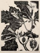 John Northcote Nash (1893-1977) Thorn Apple, 1927 signed in pencil (in the margin) wood engraving 19