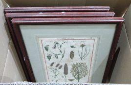 Seven framed botanical prints