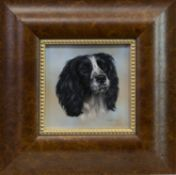 COCKER SPANIEL BECKS, AN OIL BY CARL WHITFIELD