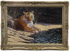 RESTING TIGER, AN OIL BY STEPHEN CUMMINS