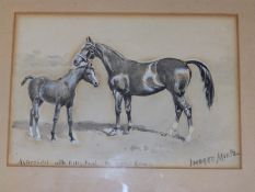 Imogen Muntz (nee Collier, 1873-1952) - watercolour - 'Asteroidel with Filly Foal by Love Song',