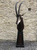 A taxidermy stuffed and mounted Sable shoulder mount, with horns, on pedestal of tapering form,