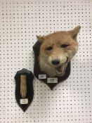 A taxidermy stuffed and mounted Fox mask in the manner of Peter Spicer,