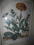 "AFTER JACOB L'ADMIRAL (1694-1770) ""Moths"