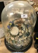 A circa 1900 shell ornament under glass dome raised on ebonised base CONDITION REPORTS