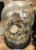 A circa 1900 shell ornament under glass