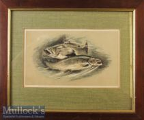 Circa 1880 'Salmon' Lithograph by Wycliffe Taylor hand coloured framed measures 30x25cm