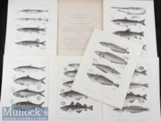 Americana – 6x original Engravings from A History of Fisher of Massachusetts by David Humphreys 1858