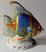 Royal Crown Derby paperweight PACIFIC ANGEL FISH: Gold stopper, certificate, first quality,