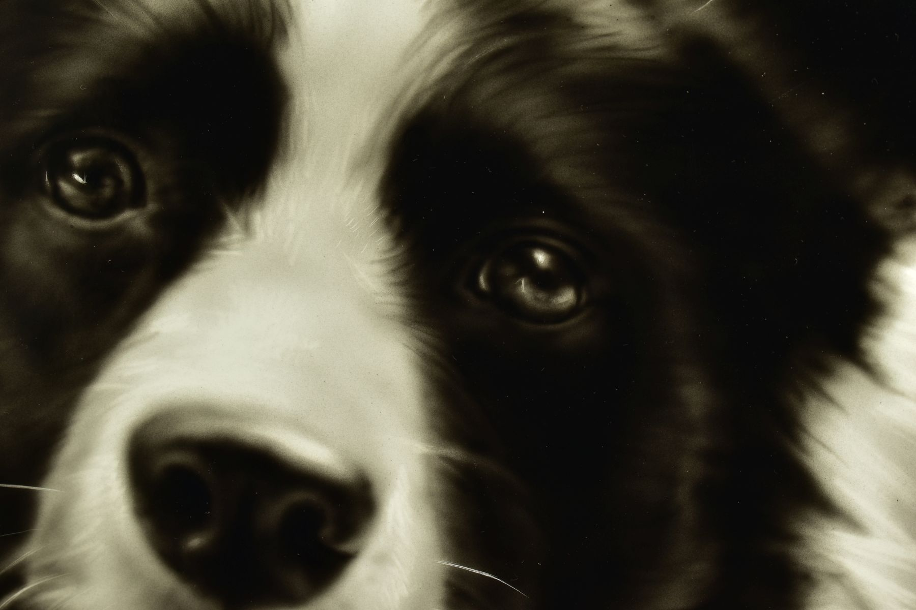 STEVEN SMITH (BRITISH 1974), 'Collie', a portrait of a Collie Dog, signed bottom right, air brush on - Image 3 of 6