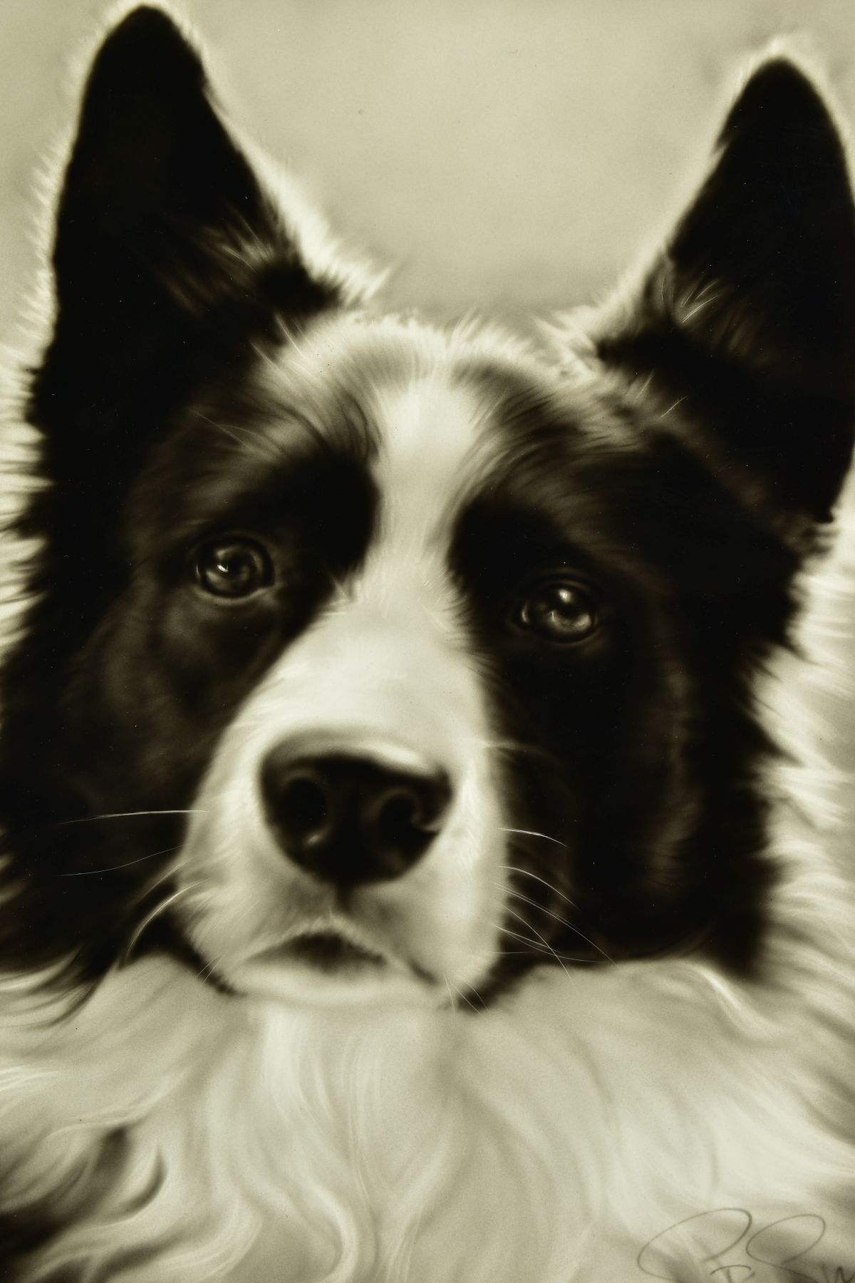 STEVEN SMITH (BRITISH 1974), 'Collie', a portrait of a Collie Dog, signed bottom right, air brush on - Image 2 of 6