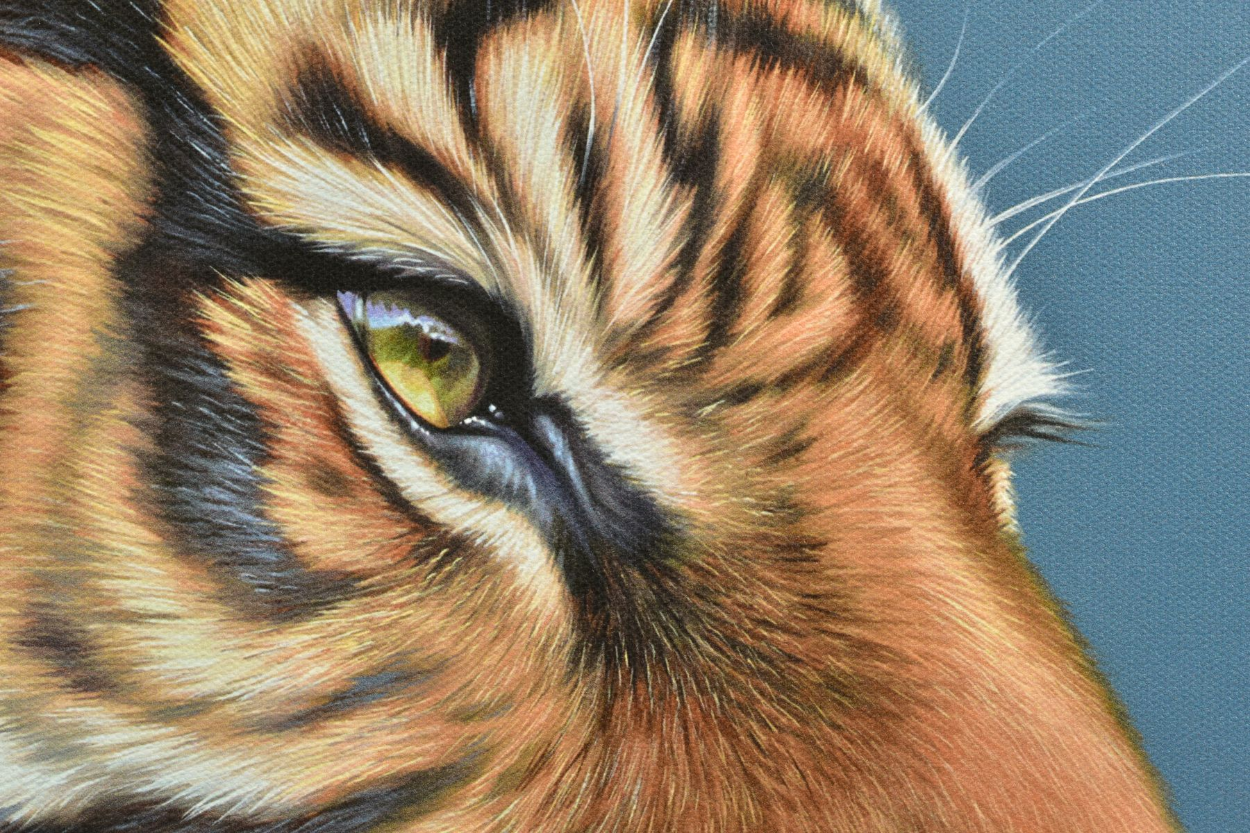 DARRYN EGGLETON (SOUTH AFRICA 1981), 'The Sentinel', an artist proof print of a Tiger, 16/20, signed - Image 3 of 6