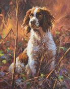 Donal McNaughton - SPRINGER IN THE WOODS - Oil on Board - 20 x 16 inches - Signed