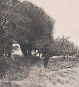 Irish School - PATH THROUGH THE TREES - Black & White Etching - 13 x 12 inches - Unsigned