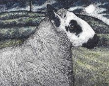 Seren Bell - KERRY HILL RAM - Pen & Ink Drawing with Watercolour Wash - 7.5 x 9.5 inches - Signed