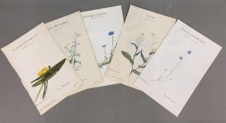 Five Victorian floral specimen watercolours,