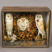 A late 19th/early 20th century preserved specimen of a pair of barn owls and four barn owl chicks
