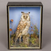 A late Victorian preserved taxidermy specimen of a long-eared owl (Asio otus) In naturalistic