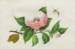 CHINESE SCHOOL (19th century) Flowers and Insects Watercolours on rice paper, unsigned,