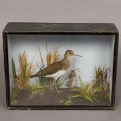 A late 19th/early 20th century preserved taxidermy specimen of a green sandpiper (Tringa