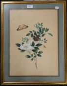 A pair of Victorian floral watercolours, framed and glazed. 32 x 44 cm.