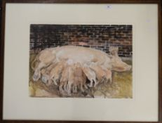 NICK JOHNSON, Piglets Feeding, watercolour and pencil, framed and glazed. 58 x 42 cm.