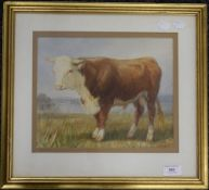 H B WILLIS, Bull, watercolour, dated '68, framed and glazed. 28 x 24 cm.