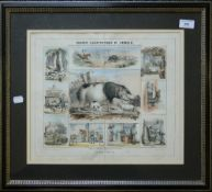 Graphic Illustrations of Animals, The Pigs, print,