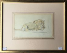 Recumbent Lion, pencil and watercolour, initialled S.A, framed and glazed. 25 x 16 cm.