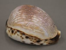 A carved conch shell inscribed with the Lord's Prayer. 9 cm long.