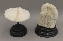Two coral specimens on display plinths. The largest 18 cm high.