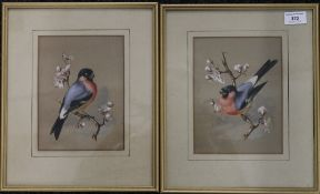 A pair of watercolours, Bullfinch's, framed and glazed. Each 15 x 20 cm.