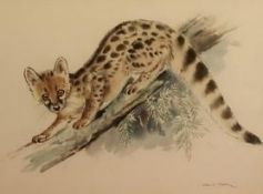Eileen A Soper (1905-1990): 'Genet', watercolour, signed, 37cm x 55cm, with Mall Galleries Society