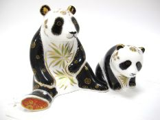 A Royal Crown Derby Paperweight 'Giant Panda', gold stopper, date code for 2007, gold signed by