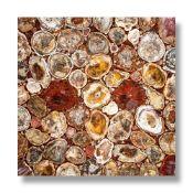 Minerals/Interior Design: A fossil wood collage tabletopMadagascar61cm square