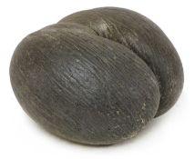 A sea coconut or coco de mer,