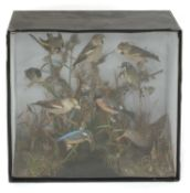 A diorama of ten stuffed and mounted countryside birds,