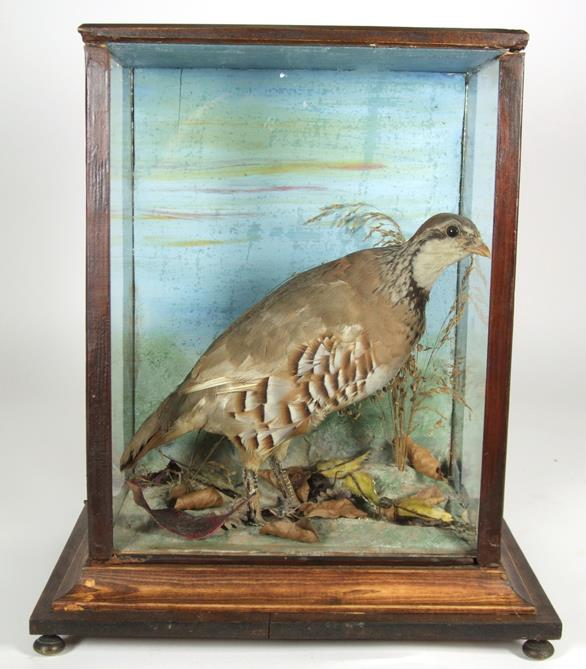 Lot 3015 - Taxidermy: A Cased Red-Legged Partridge (Alectoris rufa), a full mount adult stood upon painted faux