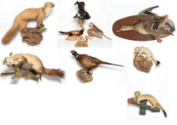 Taxidermy: A Large Group of European Countryside Animals and Birds, comprising - a full mount Musk