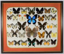 Entomology: A Framed Display of Tropical Butterflies, circa late 20th century, a display of thirty