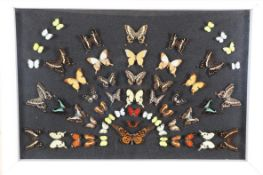Entomology: A Large Display of African Butterflies, circa 21st century, a colourful fanned display