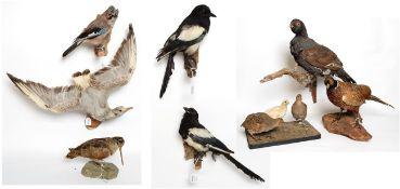 Taxidermy: European Countryside & Game Birds, circa late 20th century, three adult full mount Grey