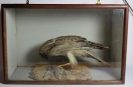 Taxidermy: A Cased Victorian Northern Harrier, circa 1880-1900, a full mount adult with finch prey