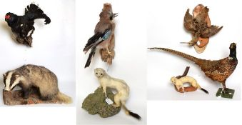Taxidermy: European Game Birds & Animals, circa late 20th century, comprising - full mount