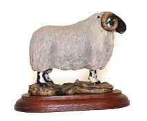 Border Fine Arts 'Blackfaced Tup' (Style One), model No. L15 by Mairi Laing Hunt, limited edition