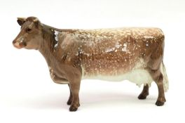 Beswick Dairy Shorthorn Cow Ch. ''Eaton Wild Eyes 91st'', model No. 1510, brown and white gloss with