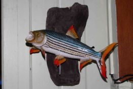 A mounted taxidermy of a tiger fish, caught in Lake Victoria, 43cm by 43cm.